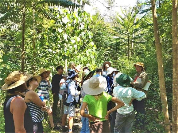 Rainforest Resoration Uki