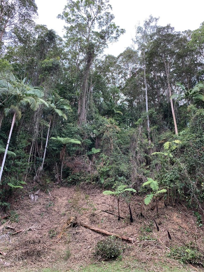 Regnerating Rainforest Hickey Am Emslie