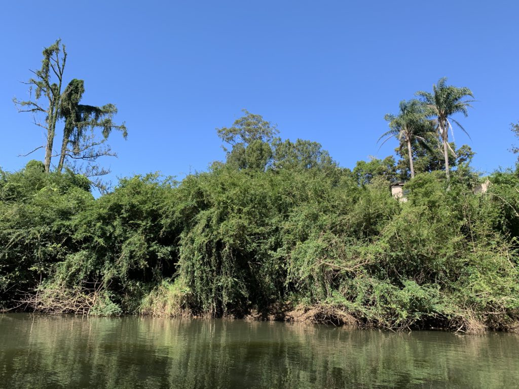 Weeds On The Oxley