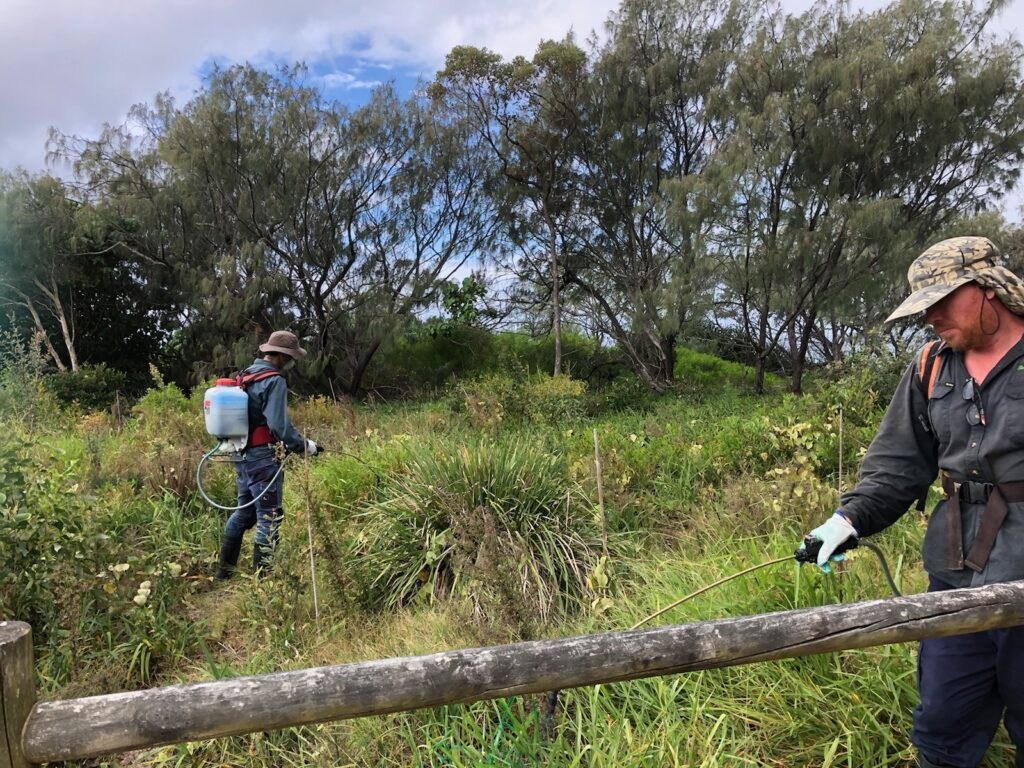 Contractors Control Priority Weeds At Salt (south Kingscliff)