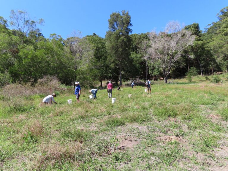 Copy Of Friends Of Cudgen Nature Reserve Planting 3